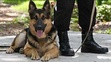 hondenbewaking isg security